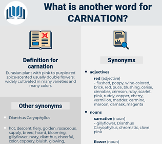 carnation, synonym carnation, another word for carnation, words like carnation, thesaurus carnation
