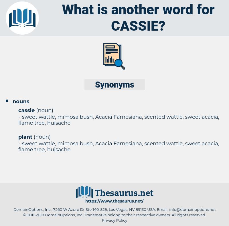 cassie, synonym cassie, another word for cassie, words like cassie, thesaurus cassie