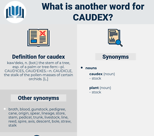 caudex, synonym caudex, another word for caudex, words like caudex, thesaurus caudex