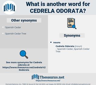 Cedrela Odorata, synonym Cedrela Odorata, another word for Cedrela Odorata, words like Cedrela Odorata, thesaurus Cedrela Odorata