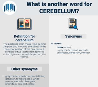 cerebellum, synonym cerebellum, another word for cerebellum, words like cerebellum, thesaurus cerebellum