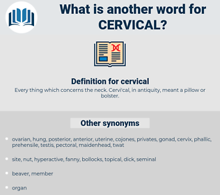 cervical, synonym cervical, another word for cervical, words like cervical, thesaurus cervical
