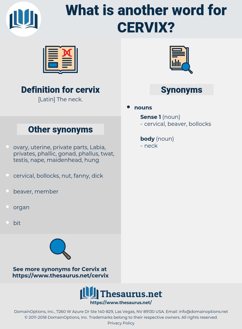 cervix, synonym cervix, another word for cervix, words like cervix, thesaurus cervix