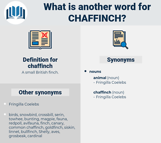 chaffinch, synonym chaffinch, another word for chaffinch, words like chaffinch, thesaurus chaffinch