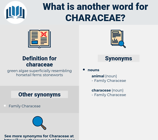 characeae, synonym characeae, another word for characeae, words like characeae, thesaurus characeae