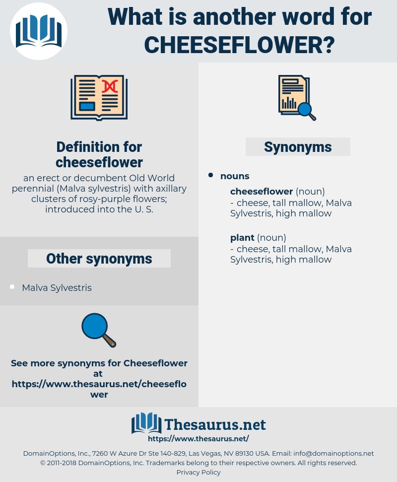 cheeseflower, synonym cheeseflower, another word for cheeseflower, words like cheeseflower, thesaurus cheeseflower