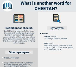 cheetah, synonym cheetah, another word for cheetah, words like cheetah, thesaurus cheetah