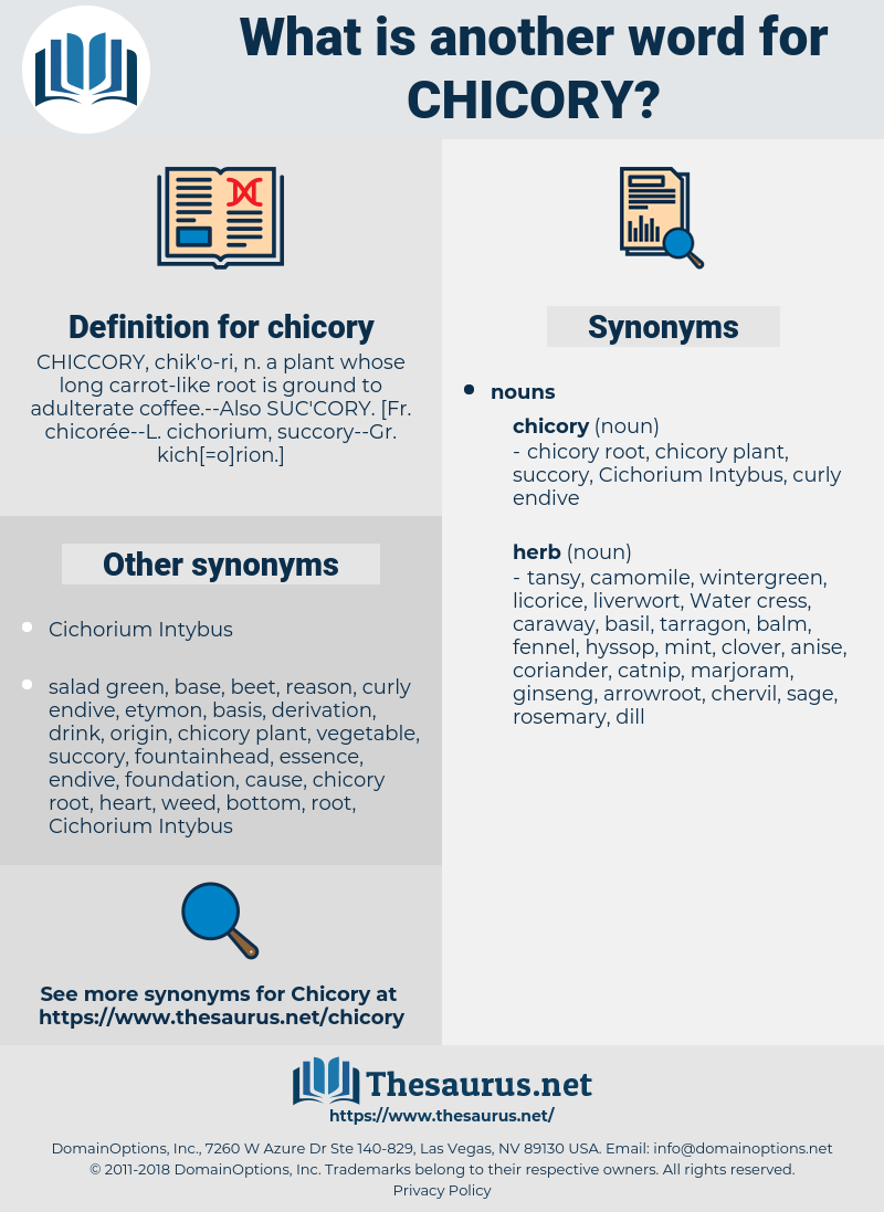 chicory, synonym chicory, another word for chicory, words like chicory, thesaurus chicory