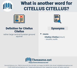 Citellus Citellus, synonym Citellus Citellus, another word for Citellus Citellus, words like Citellus Citellus, thesaurus Citellus Citellus