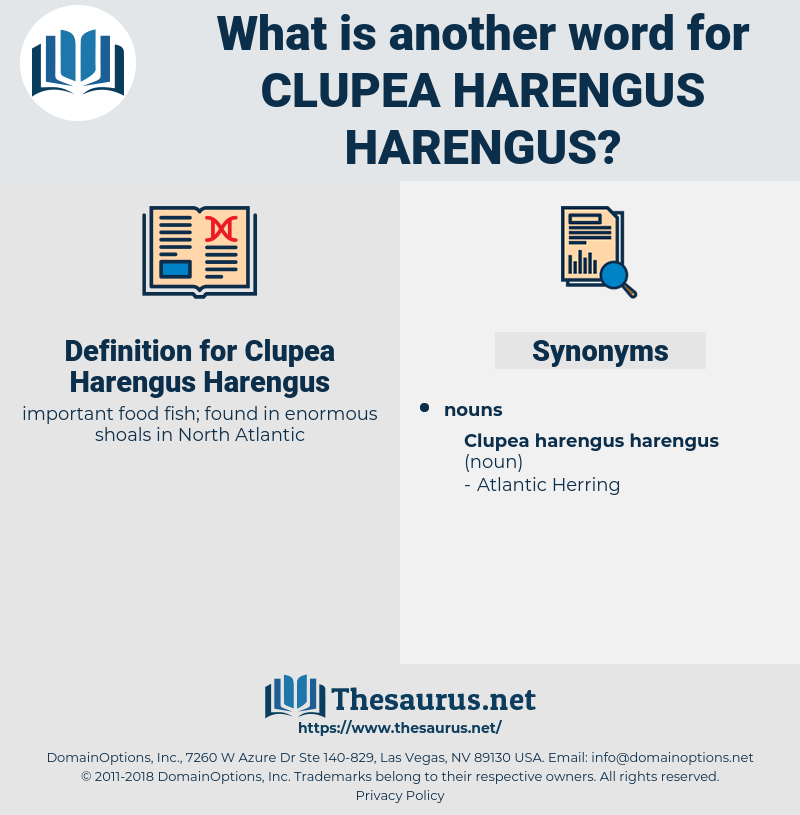Clupea Harengus Harengus, synonym Clupea Harengus Harengus, another word for Clupea Harengus Harengus, words like Clupea Harengus Harengus, thesaurus Clupea Harengus Harengus