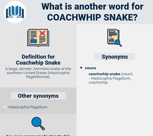 Coachwhip Snake, synonym Coachwhip Snake, another word for Coachwhip Snake, words like Coachwhip Snake, thesaurus Coachwhip Snake
