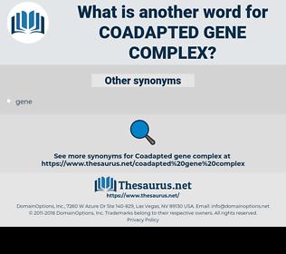 coadapted gene complex, synonym coadapted gene complex, another word for coadapted gene complex, words like coadapted gene complex, thesaurus coadapted gene complex