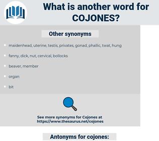 cojones, synonym cojones, another word for cojones, words like cojones, thesaurus cojones