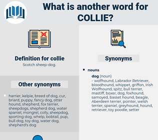 collie, synonym collie, another word for collie, words like collie, thesaurus collie