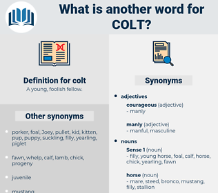 colt, synonym colt, another word for colt, words like colt, thesaurus colt