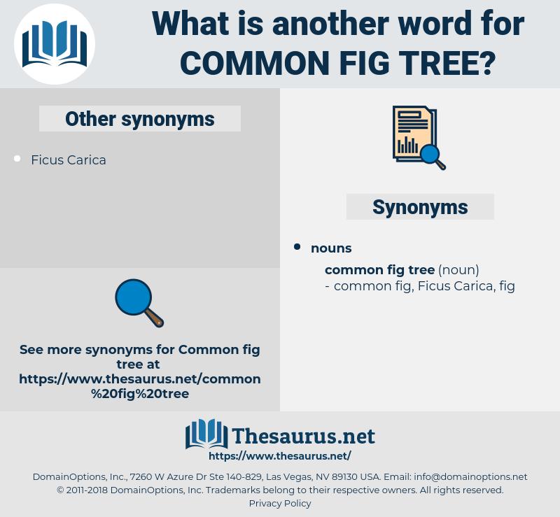 common fig tree, synonym common fig tree, another word for common fig tree, words like common fig tree, thesaurus common fig tree