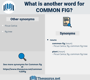 common fig, synonym common fig, another word for common fig, words like common fig, thesaurus common fig