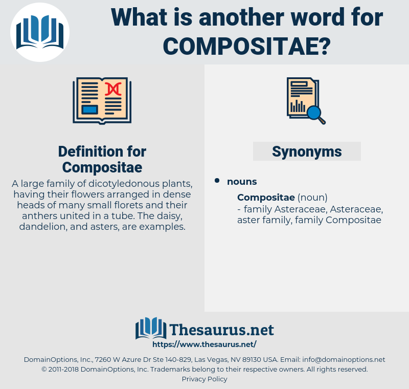 Compositae, synonym Compositae, another word for Compositae, words like Compositae, thesaurus Compositae