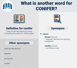 conifer, synonym conifer, another word for conifer, words like conifer, thesaurus conifer