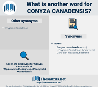 Conyza Canadensis, synonym Conyza Canadensis, another word for Conyza Canadensis, words like Conyza Canadensis, thesaurus Conyza Canadensis