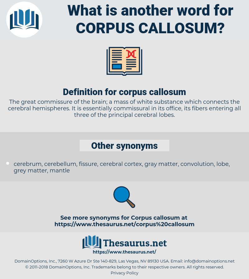 corpus callosum, synonym corpus callosum, another word for corpus callosum, words like corpus callosum, thesaurus corpus callosum