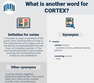 cortex, synonym cortex, another word for cortex, words like cortex, thesaurus cortex