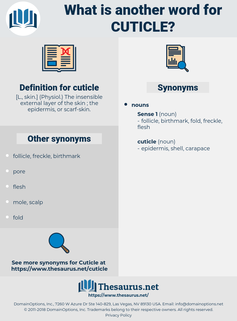 cuticle, synonym cuticle, another word for cuticle, words like cuticle, thesaurus cuticle