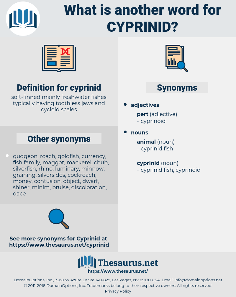cyprinid, synonym cyprinid, another word for cyprinid, words like cyprinid, thesaurus cyprinid