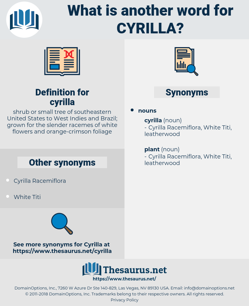 cyrilla, synonym cyrilla, another word for cyrilla, words like cyrilla, thesaurus cyrilla