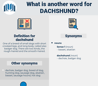 dachshund, synonym dachshund, another word for dachshund, words like dachshund, thesaurus dachshund