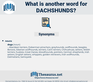 dachshunds, synonym dachshunds, another word for dachshunds, words like dachshunds, thesaurus dachshunds