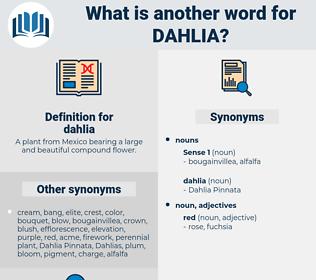 dahlia, synonym dahlia, another word for dahlia, words like dahlia, thesaurus dahlia