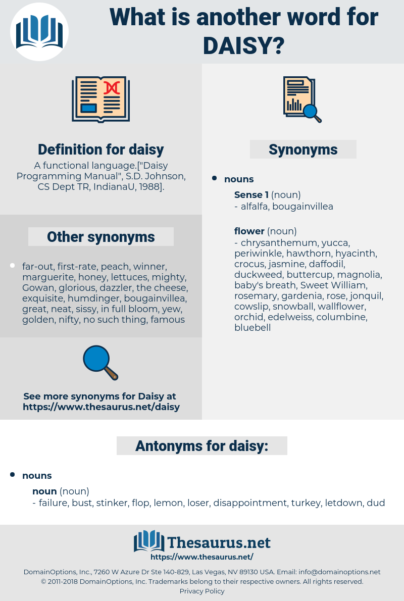 Synonyms for DAISY, Antonyms for DAISY - Thesaurus net