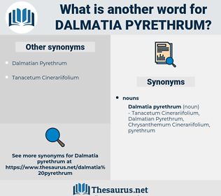 Dalmatia Pyrethrum, synonym Dalmatia Pyrethrum, another word for Dalmatia Pyrethrum, words like Dalmatia Pyrethrum, thesaurus Dalmatia Pyrethrum