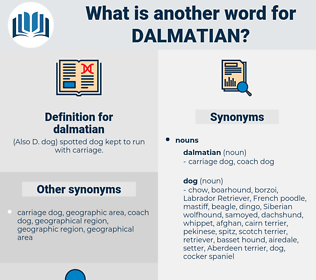 dalmatian, synonym dalmatian, another word for dalmatian, words like dalmatian, thesaurus dalmatian