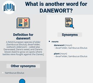 danewort, synonym danewort, another word for danewort, words like danewort, thesaurus danewort