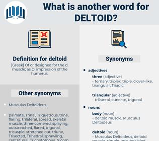 deltoid, synonym deltoid, another word for deltoid, words like deltoid, thesaurus deltoid