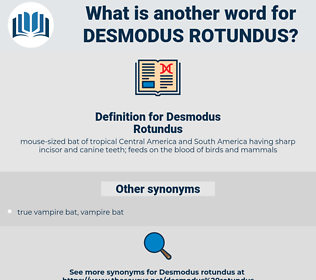 Desmodus Rotundus, synonym Desmodus Rotundus, another word for Desmodus Rotundus, words like Desmodus Rotundus, thesaurus Desmodus Rotundus