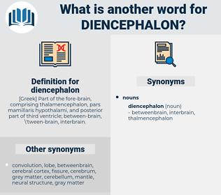 diencephalon, synonym diencephalon, another word for diencephalon, words like diencephalon, thesaurus diencephalon