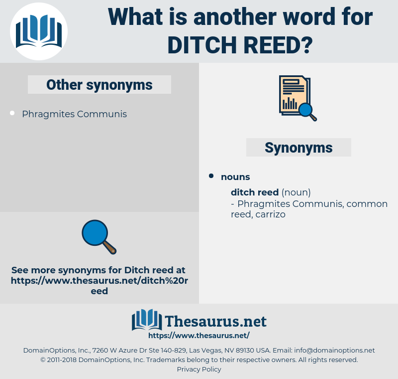 ditch reed, synonym ditch reed, another word for ditch reed, words like ditch reed, thesaurus ditch reed