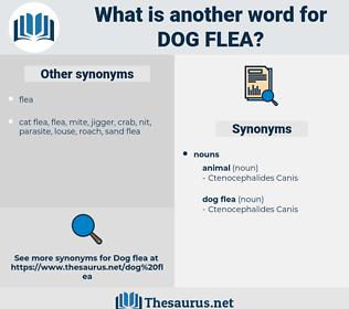 dog flea, synonym dog flea, another word for dog flea, words like dog flea, thesaurus dog flea
