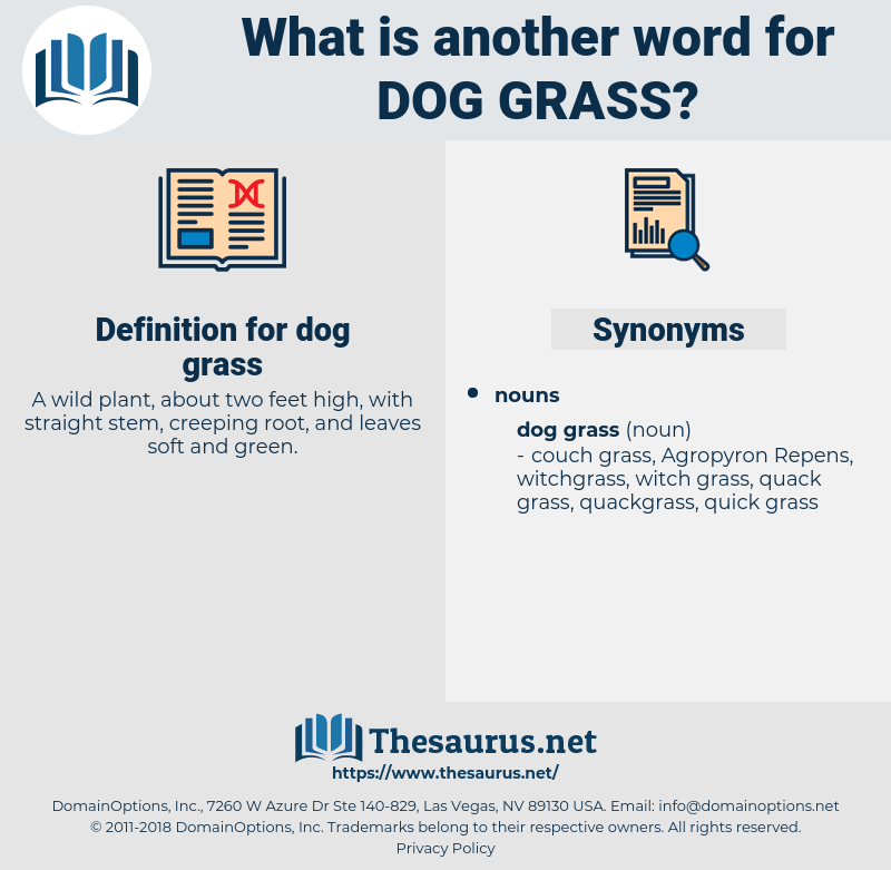 dog grass, synonym dog grass, another word for dog grass, words like dog grass, thesaurus dog grass