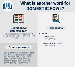 domestic fowl, synonym domestic fowl, another word for domestic fowl, words like domestic fowl, thesaurus domestic fowl