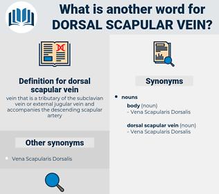 dorsal scapular vein, synonym dorsal scapular vein, another word for dorsal scapular vein, words like dorsal scapular vein, thesaurus dorsal scapular vein
