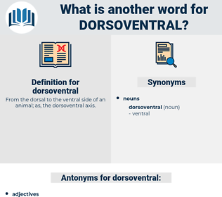 dorsoventral, synonym dorsoventral, another word for dorsoventral, words like dorsoventral, thesaurus dorsoventral
