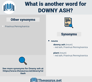downy ash, synonym downy ash, another word for downy ash, words like downy ash, thesaurus downy ash
