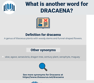 dracaena, synonym dracaena, another word for dracaena, words like dracaena, thesaurus dracaena
