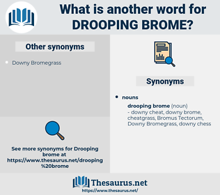 drooping brome, synonym drooping brome, another word for drooping brome, words like drooping brome, thesaurus drooping brome