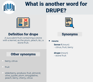 drupe, synonym drupe, another word for drupe, words like drupe, thesaurus drupe