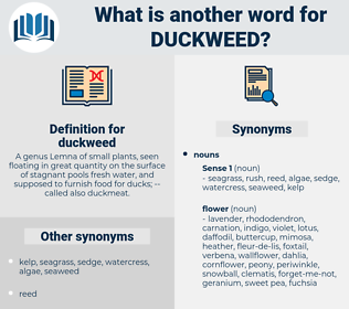 duckweed, synonym duckweed, another word for duckweed, words like duckweed, thesaurus duckweed